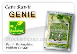 Benih Cabe Rawit